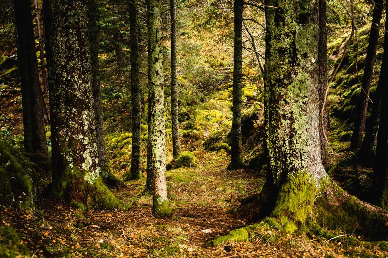Naturbilder fra Havrå