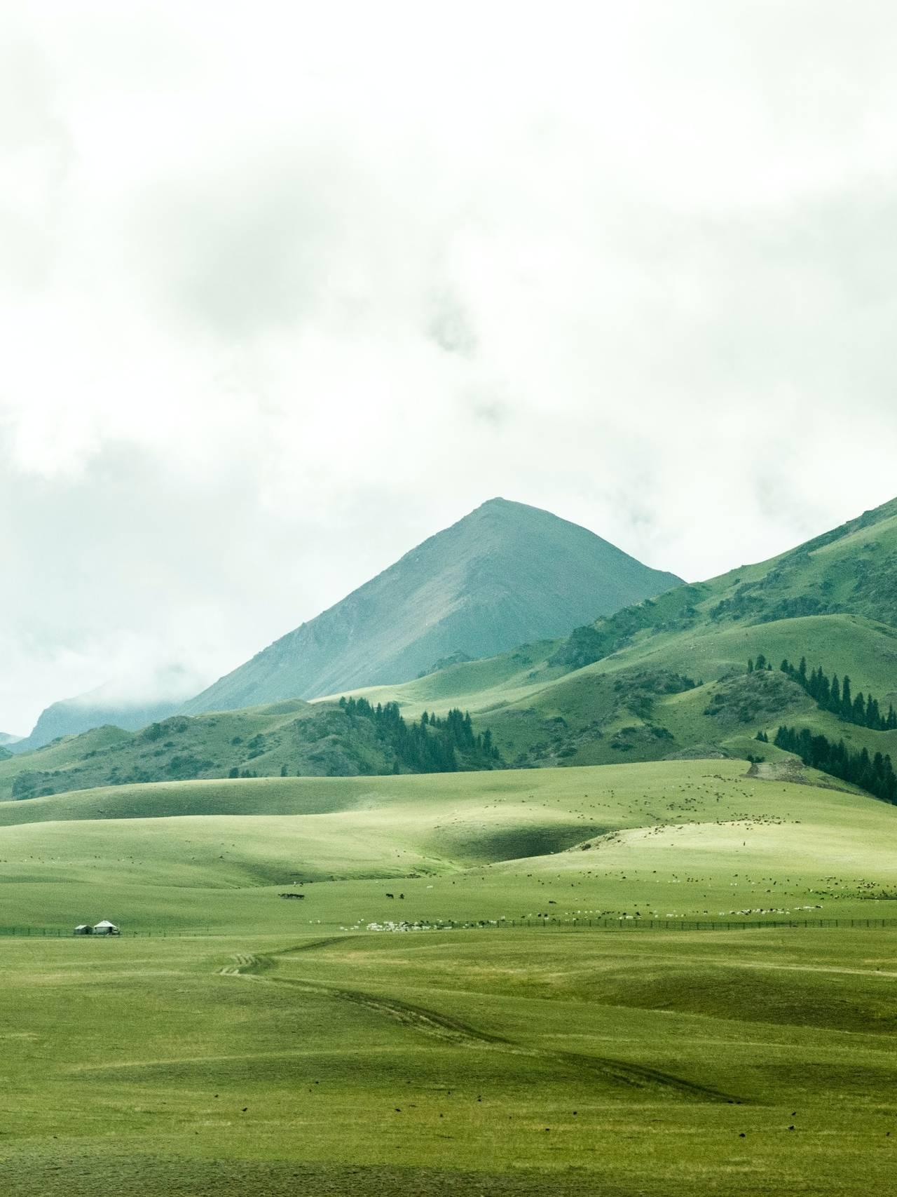 Grønt landskap.