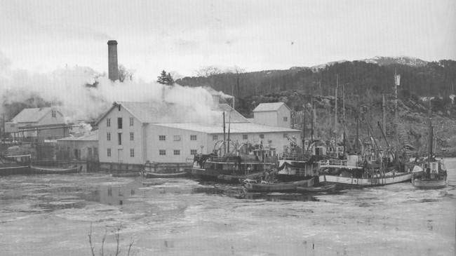 Florø Sildoljefabrikk ca. 1950. Foto: Kåre Botnmark. Eigar: Vest Foto/Fylkesarkivet i Sogn og Fjordane.